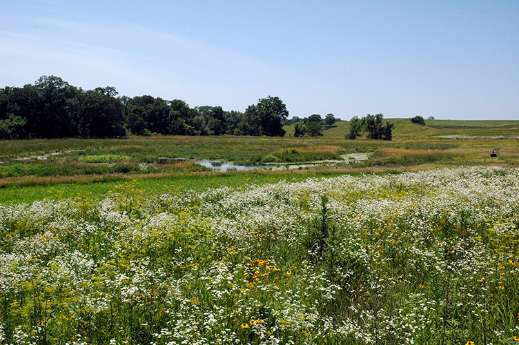 A wetland in Iowa.
