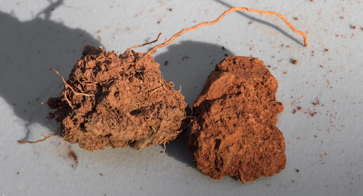 """A photo of two chunks of soil; healthy soil on the right with organic matter, and nutrient-depleted soil on the right"""
