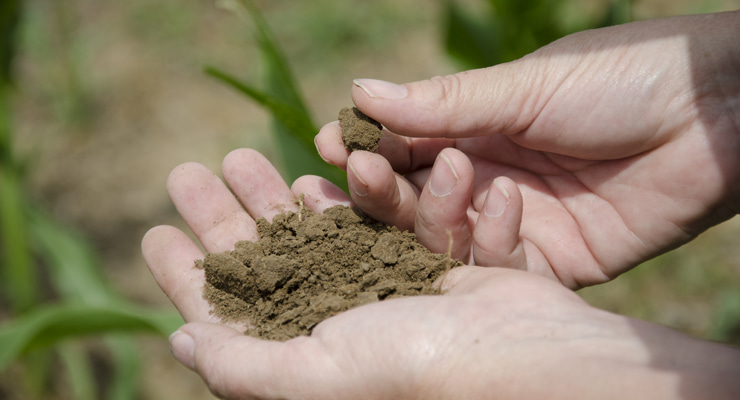"""Photo of hands holding soil"""