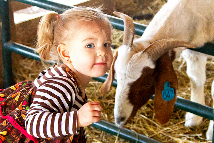 Daughter Liberty feeds Elmer, the farm's lead goat