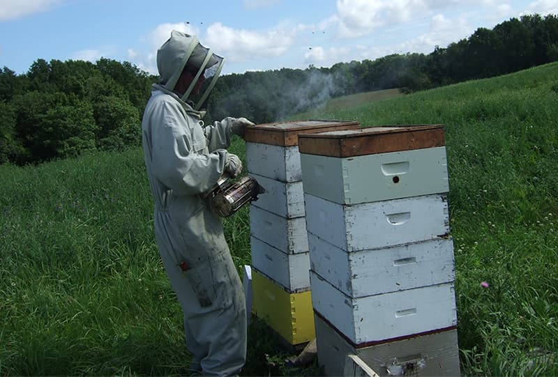 A person in a bee suit accessing a bee hive