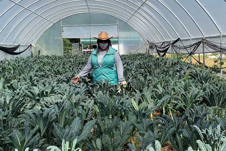 A person in a high tunnel structure, protecting crops and extending the growing season.