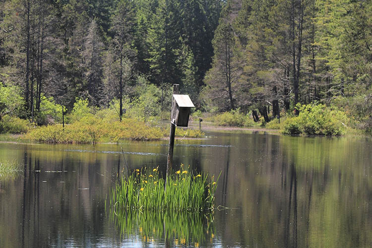 A birdhouse sits in the middle of a wetland.
