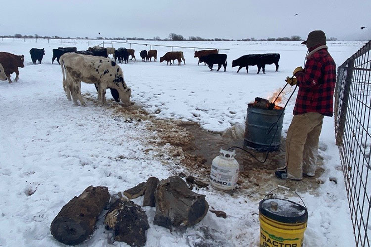 In Texas, producers are finding creative ways to get water to cattle, including melting ice with fire. Photo by Dee Ann Littlefield, NRCS.