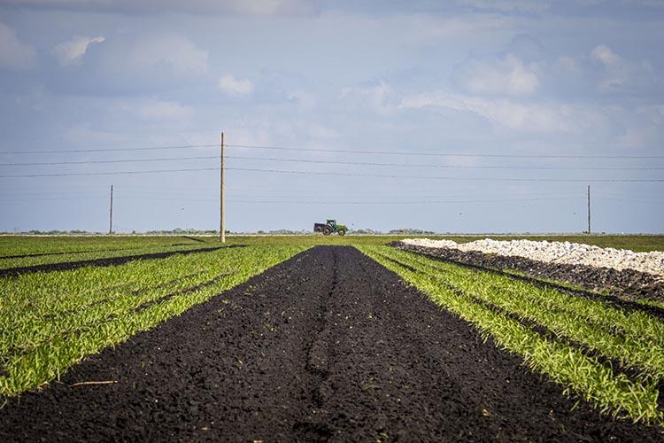 American Rescue Plan Socially Disadvantaged Farmer Debt Payments
