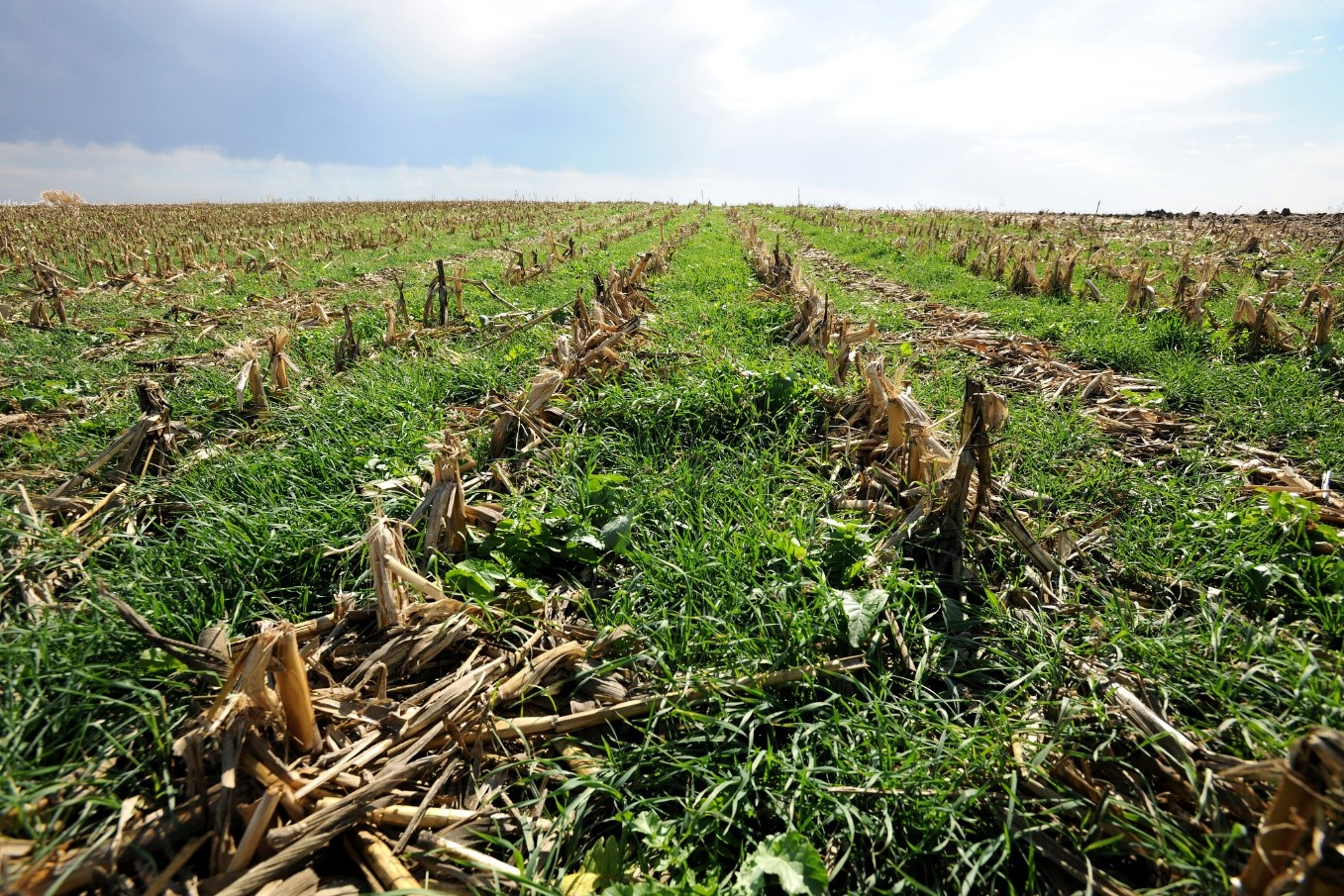 Cover crops can be used to reduce soil erosion, improve nutrient cycling, build soil organic matter, and improve the soil's ability to take in water.