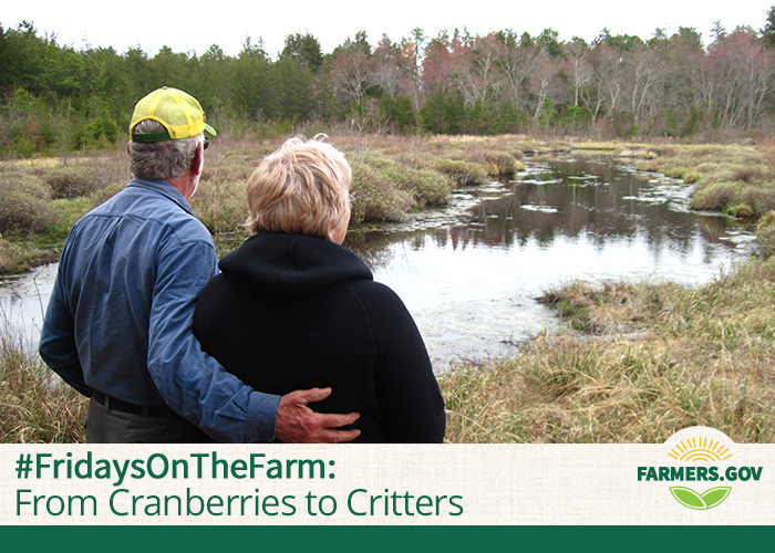 Ann and William Fox transformed their cranberry farm into a thriving forested wetland.