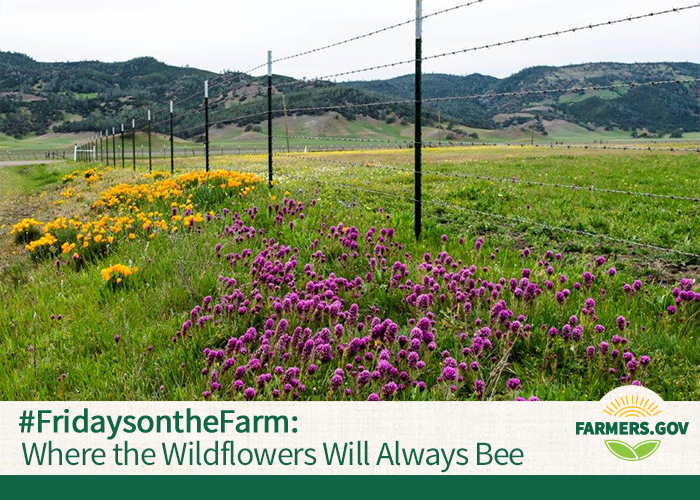 Bees are pretty happy creatures on Jim Keegan's ranch in Bear Valley, Calif., and, with help of a conservation easement, the bees will be happy there forever.