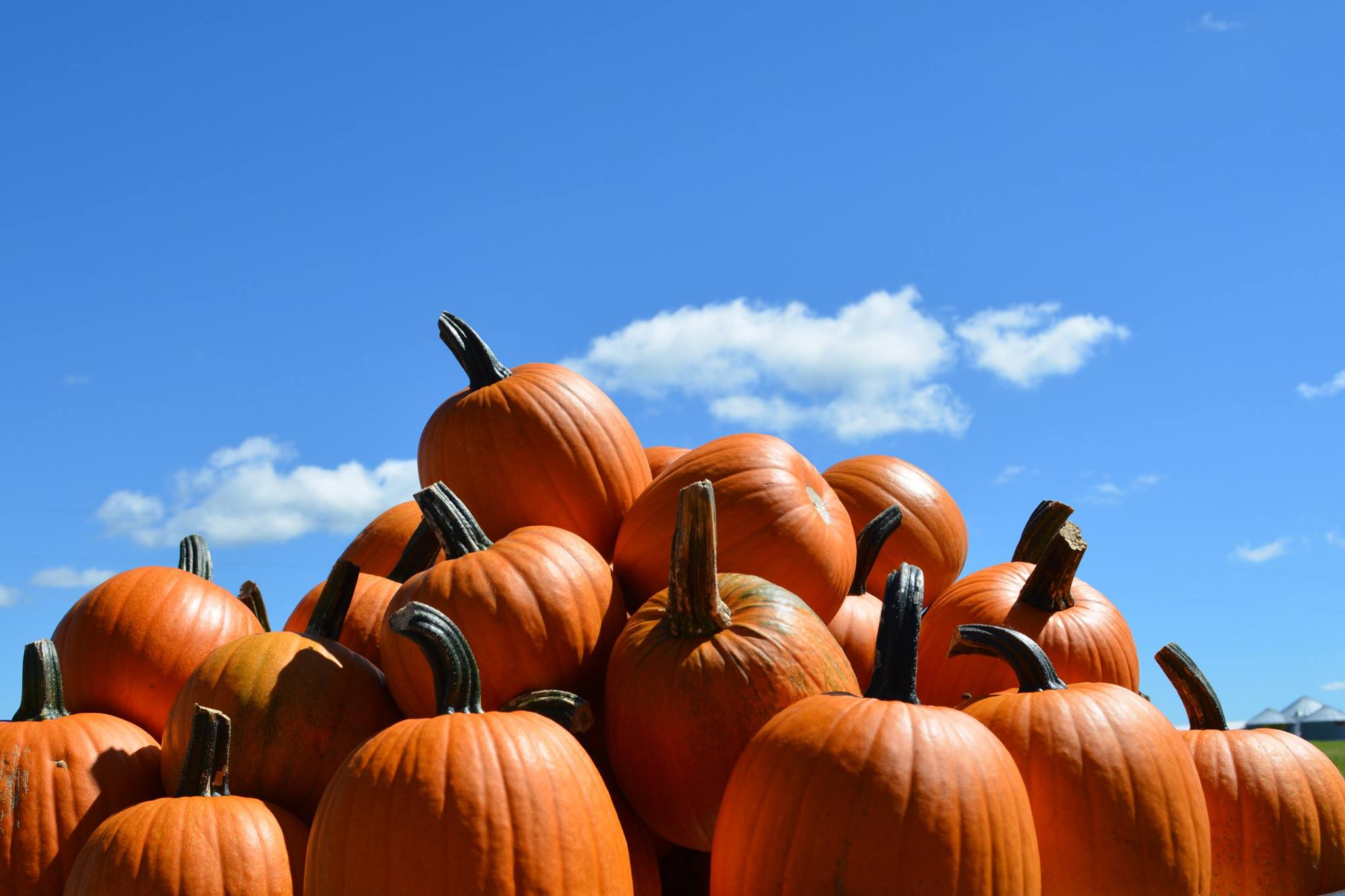 Pumpkins have been an integral part of the Huitink's lives for the last 29 years. Photo courtesy of Pumpkinland