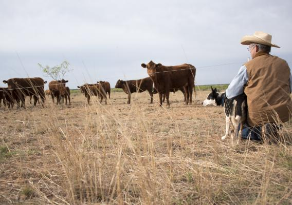 After surviving the drought of the 1950's and enduring two hard droughts in the past 10 years, developing alternative water sources became critical for Texas rancher Kregg McKenny. Photo Credit: USDA-NRCS