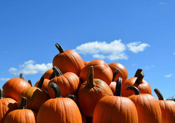 Pumpkins have been an integral part of the Huitink's lives for the last 29 years. Photo courtesy of Pumpkinland.