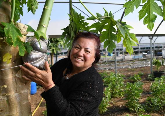 In this week's #FridaysOnTheFarm, meet Maria Alonso, who began farming in 2010 in Ontario, California as part of a quest to provide as fresh fruits and vegetables for her son, who was suffering from symptoms of attention deficit hyperactivity disorder, or ADHD.