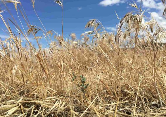 Disaster Recovery Resources | Farmers gov