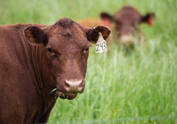 Strategies for Reducing Forage Shortages