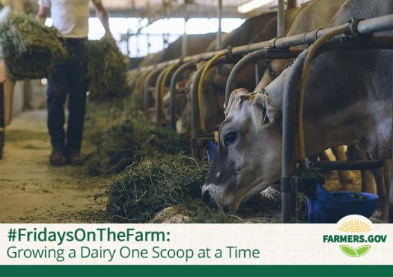 Growing a Dairy One Scoop at a Time