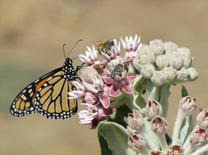 Pollinators on a flower.