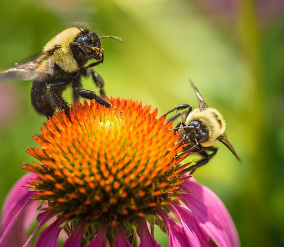 Bees on a flower.