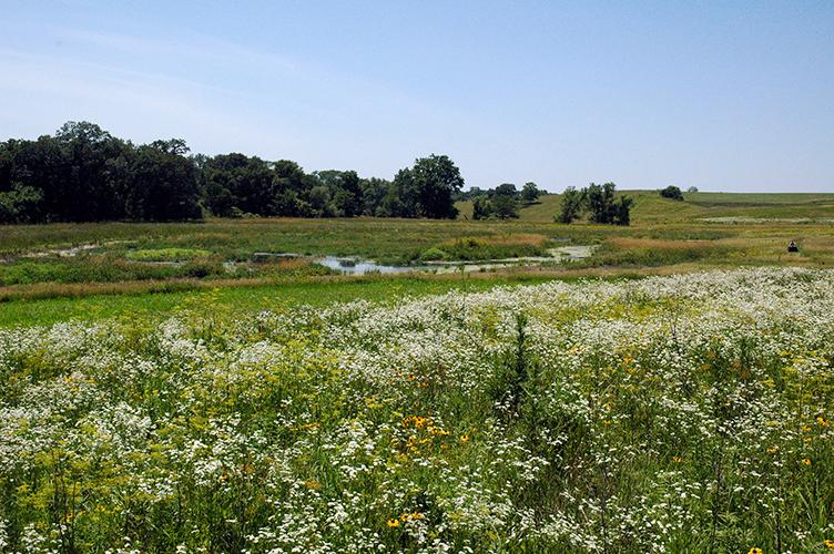 A wetland in Iowa.