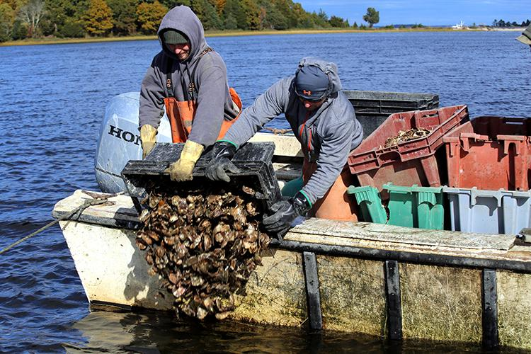 Men dump oyster shells from a boat.