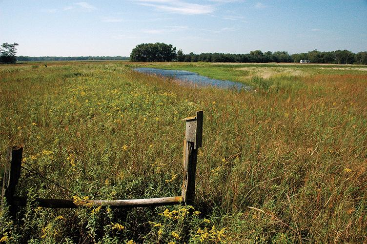 Wetlands with a bird box for habitat.