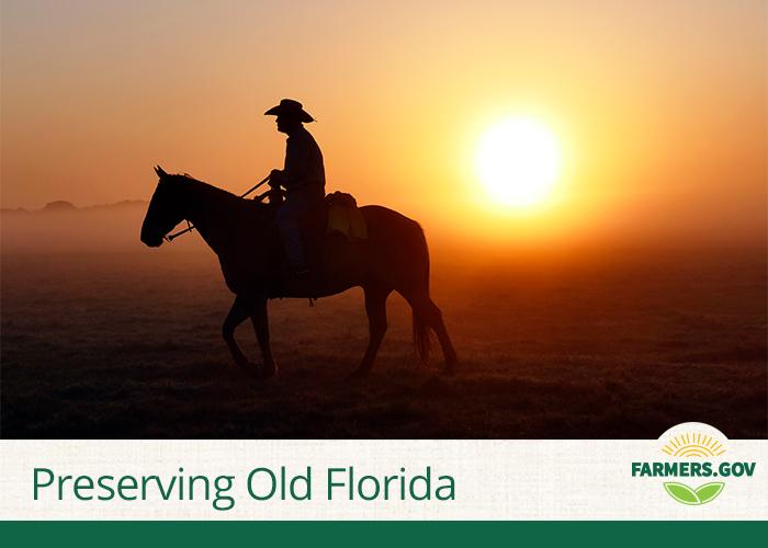 The Lightsey family has been running cattle in central Florida since the 1850s, but with 1,000 people moving to Florida daily, development encroaches on their legacy and the natural resources that support it.