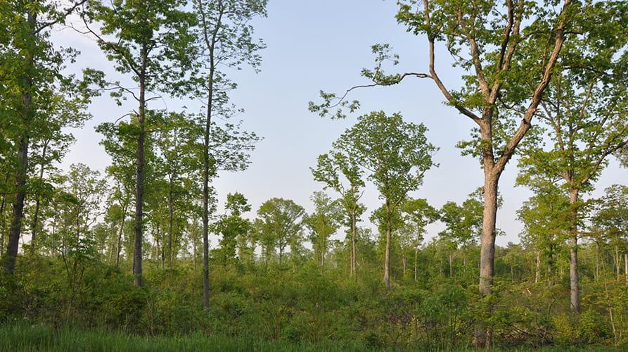 Forest landowners can use sustainable forestry practices to improve the health of their forests and habitat for wildlife.