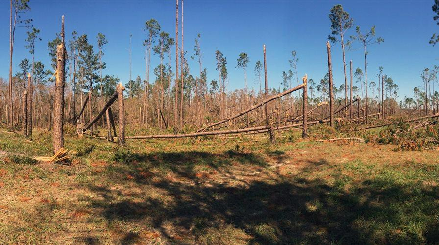 If you are interested in replanting with longleaf pine, USDA's Natural Resources Conservation Service and Farm Service Agency have programs that can help finance your reforestation