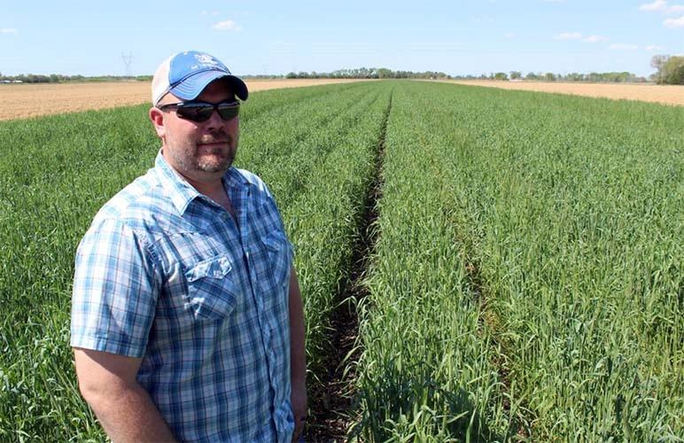 """Noah Seim's rye cover crop helped serve as a kind of """"ark,"""" protecting his field during the heavy flooding in Nebraska this year."""