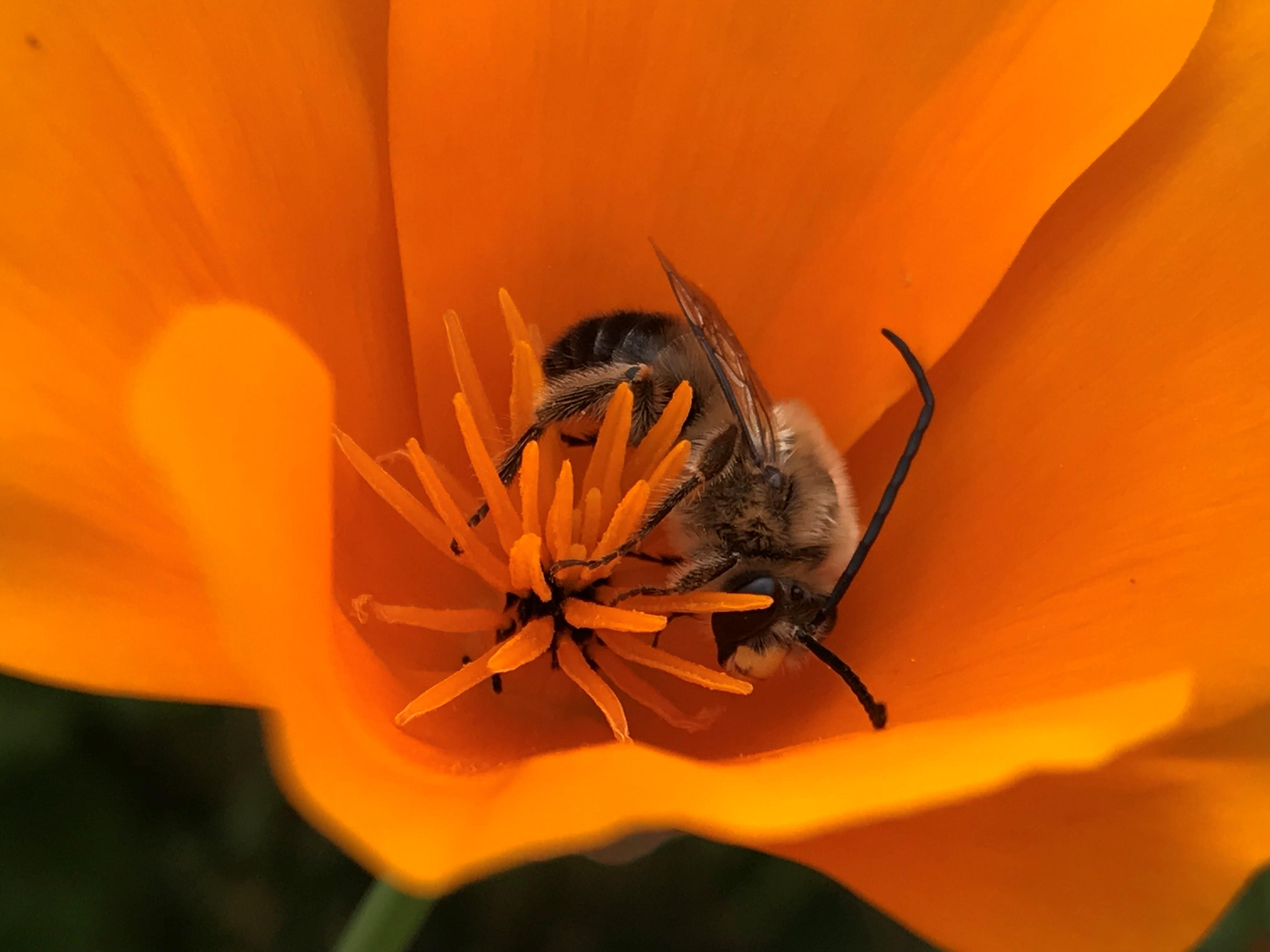Honey bees and native bees are estimated to support $18 to $27 billion in crop yields each year in the United States.