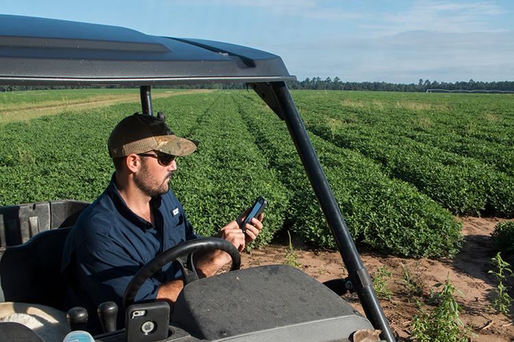 A Georgia peanut farmer using his smartphone to monitor his crop's water needs.