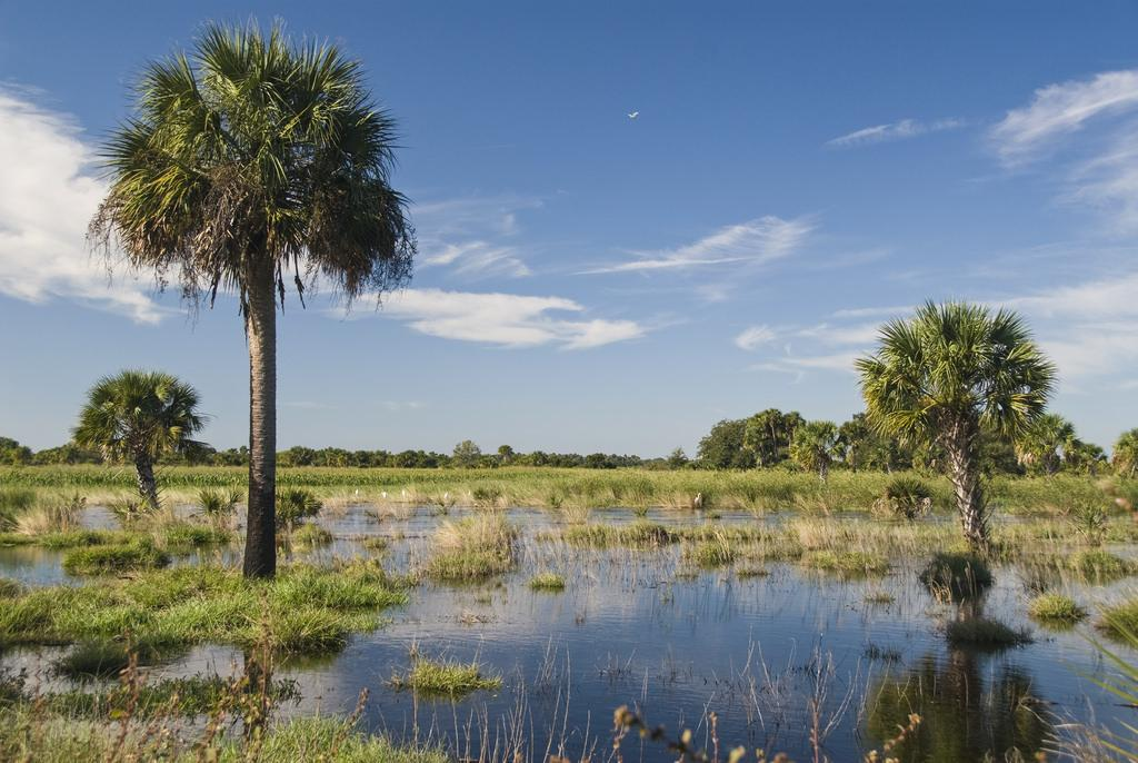 The Everglades are home to the largest mangrove ecosystem in the western hemisphere as well as a network of other ecosystems, including wet prairies, sawgrass marshes, swamps and hardwood hammocks stretching from Lake Okeechobee to Florida Bay.