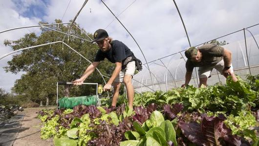 Workers caring for produce in a hoop house